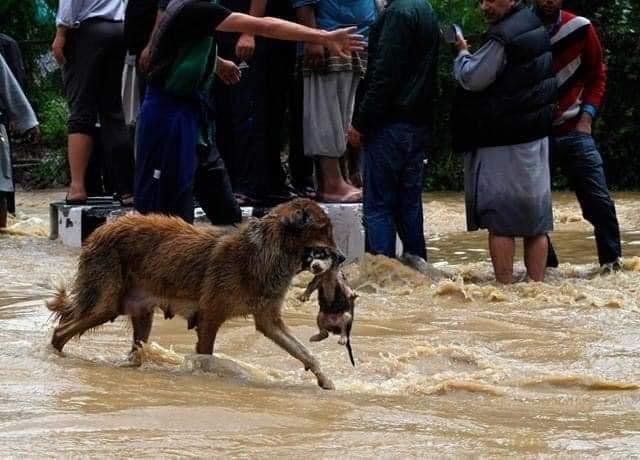Huracán Iota causa 8 muertos a su paso por Nicaragua