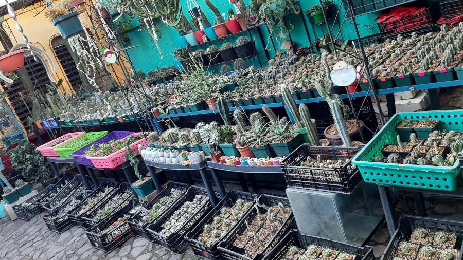Jardintopía, un paraíso de cactus y suculentas en Sonsonate