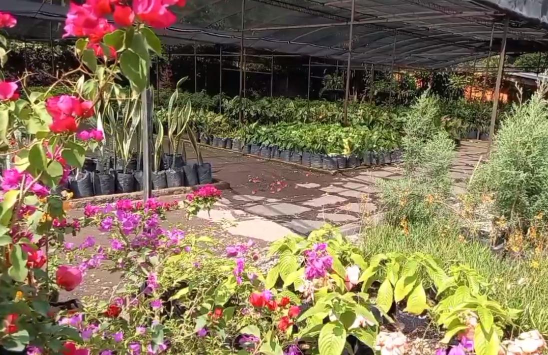 Vivero Jardín Botánico Plan de La Laguna, una brecha entre la ciudad